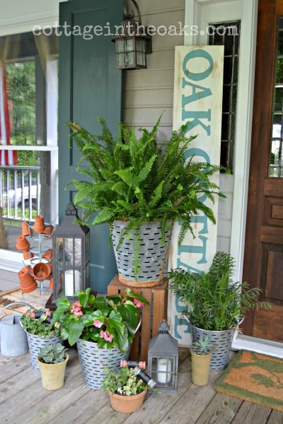 Ferns in olive buckets on front porch #summer #cottage