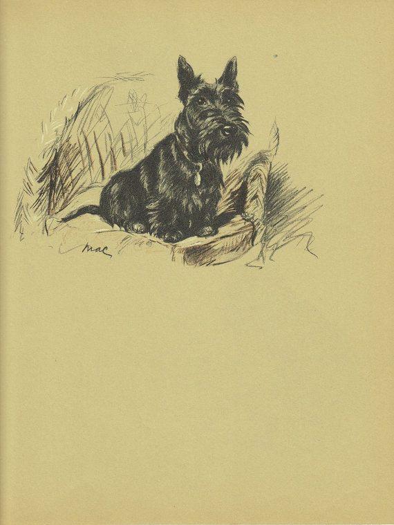 SCOTTIE Antique chien imprimé Portrait danimal des années