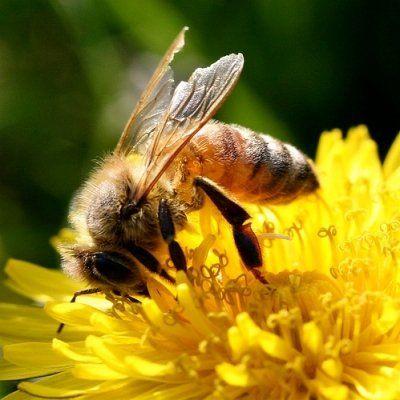 Kids Investigate Bees