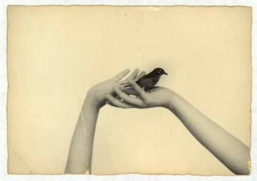 Photographer; Masao Yamamoto, there's always something so fragile about his work
