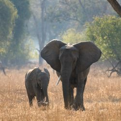 Call on China to stem the surging demand for illegal ivory that is fueling the slaughter of Africa's remaining elephants. | Click link to website to sign the petition.