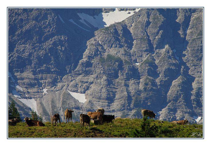 ...nennen die Bergbauern die Zeit, in denen das Vieh in den Genuss der hochligenden Bergwiesen zu kommen. Sie verleihen dem aus der Milch gewonnenen Bergkäse seinen typischen würzigen Geschmack. Sie dauert etwa von Juli bis September.   Hier eine kleine Kuhherde vor der Kulisse des Kleinen Daumens in den Allgäuer Alpen.    Gesehen anlässlich einer Tour mit Sybille und Hans-Peter Groß mit Oskar auf den Bschießer. Fotografiert mit Großens TT (Turbo-Tele) ;-)