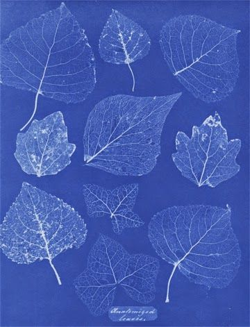 G-Souto's Blog: Education: Anna Atkins : Botanist and the 1st woman photographer