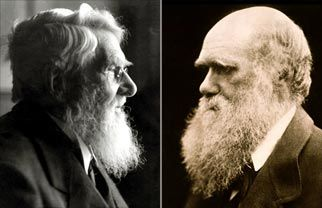 Great minds think alike and apparently have huge beards :) Wallace & Darwin