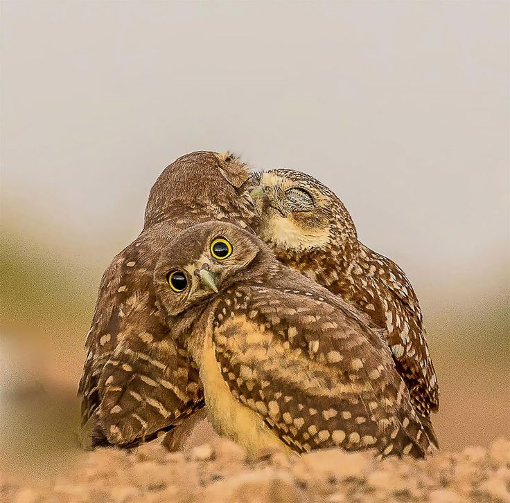 Here Are The Finalists Of The Comedy Wildlife Photography Awards 2017