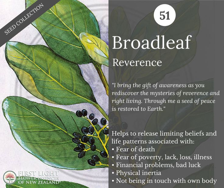 Broadleaf works to help release limiting beliefs and fears carried in the DNA around money, possessions and physicality.   Broadleaf is ideal for those who feel challenged by poverty consciousness or are being stuck in patterns of lack and loss.