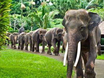 Elephant Safari Park | Little Bali Love