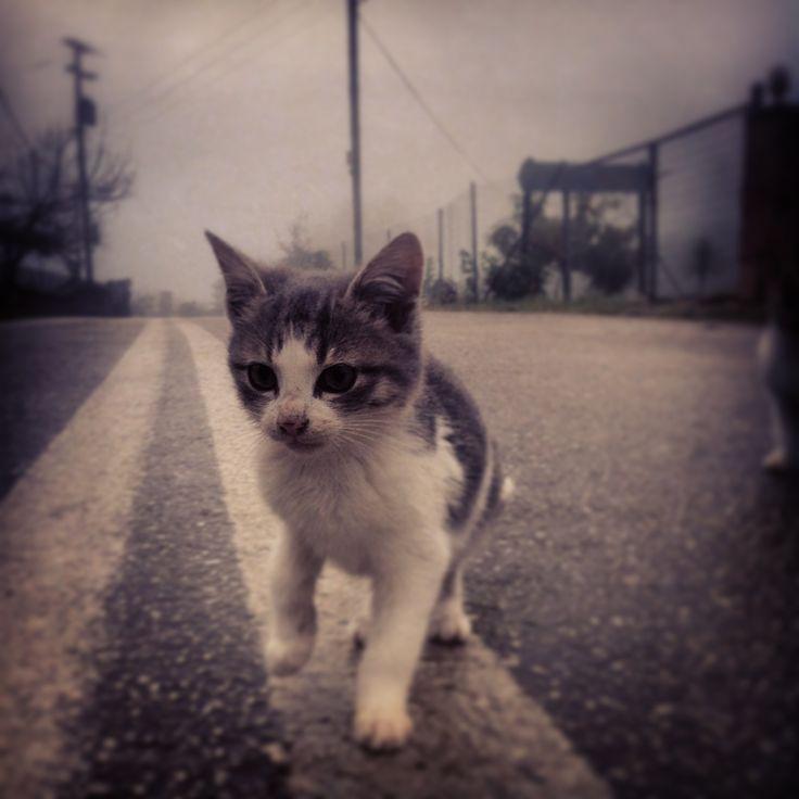 ☆ Day cat walks
