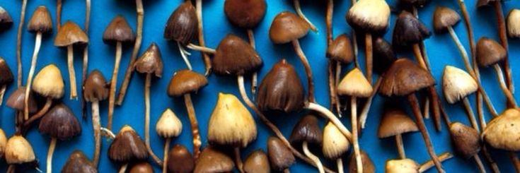 Paddo's kunnen helpen bij het stoppen met roken