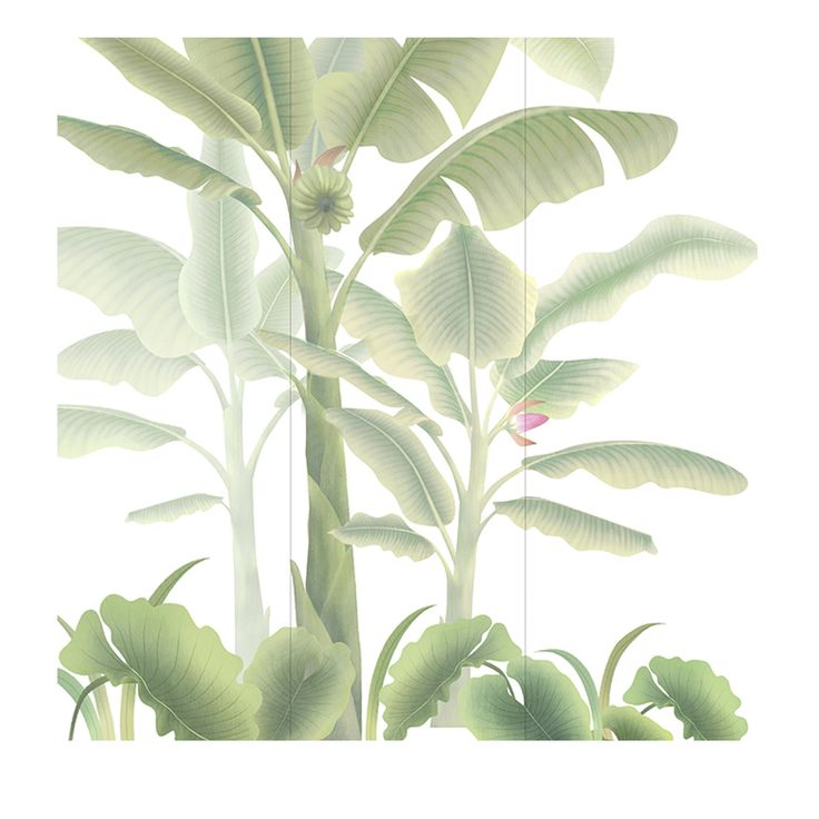 The wallpaper is part of the Asia collection, featuring exotic natural designs reminiscent of Japanese tropical landscapes. This piece is made up of three sheets of white silk, which fit together to reveal an elegant composition of flowering banana trees. The color and size of the wallpaper can be personalized to fit the client's needs. This product will be accompanied by a detailed technical drawing with instructions for laying.