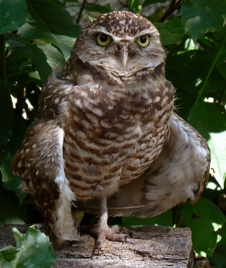 Free Owl Wallpapers: 1000+ Ideas About Owl Wallpaper Iphone On Pinterest