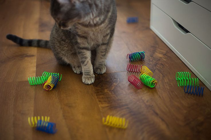 Pets Home For When Kitty S Home Alone Toys Cats Play With By Themselves Cat Toys Pet Cat Toys Cat Playing