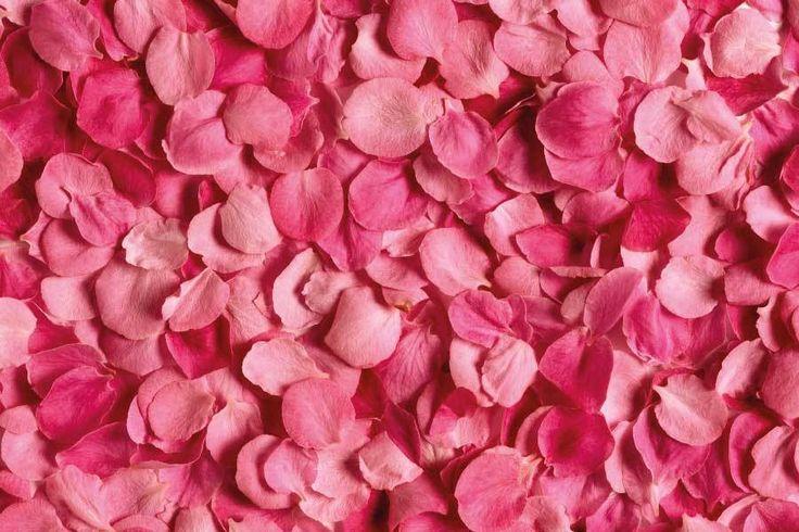 Macérât huileux de pétales de rose -