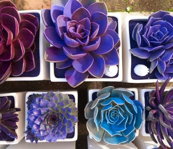 spray painted Succulents? hmmmm... too weird or really friggen cool?