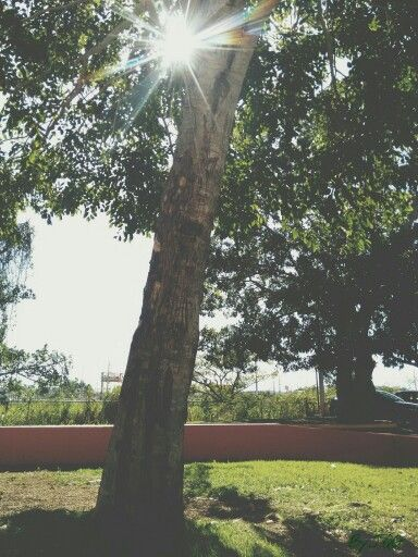 #Tree #Isabela #PR #PuertoRico #Photography #BYJQG