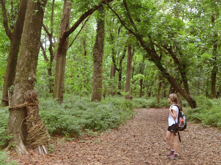 Hiking - Driodrio Forest Sigatoka Sand Dunes, Fiji, tree huggers sculptures