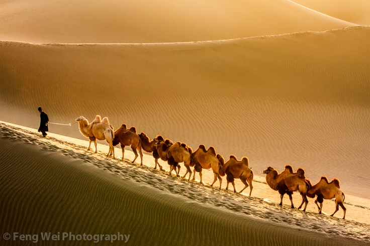 A Uyghur man travelling with his camels in Taklamakan desert, 2nd largest desert in the world, located in southern Xinjiang Uyghur Autonomous Region of China. Photo by Feng Wei