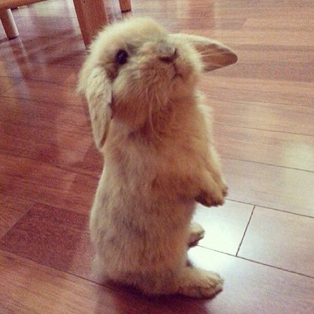 27 Bunnies That Will Cure Any Case of the Mondays