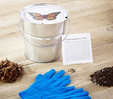 Butterfly Pail from Pottery Barn - flowers bloom continually from early summer through fall
