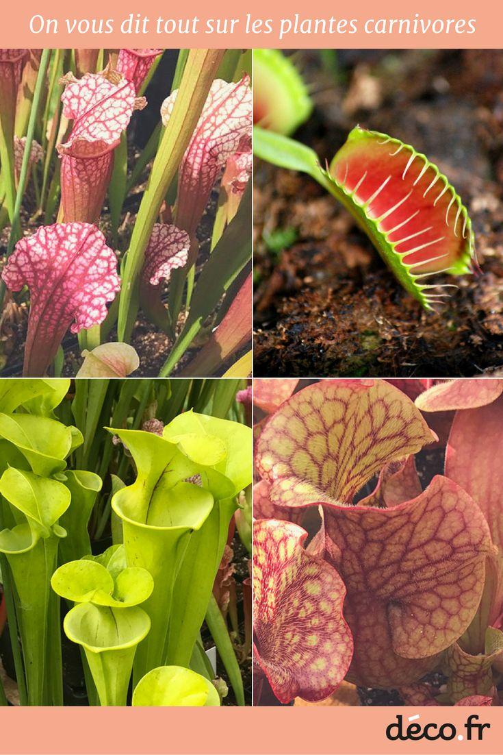 25 best ideas about les plantes carnivores on pinterest for Toutes les plantes vertes