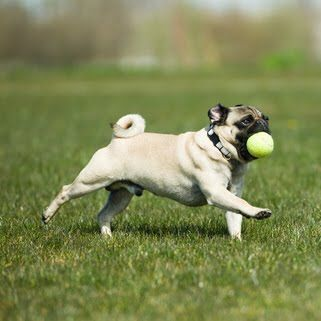 18 Best Images About Active Dogs On Pinterest Miami