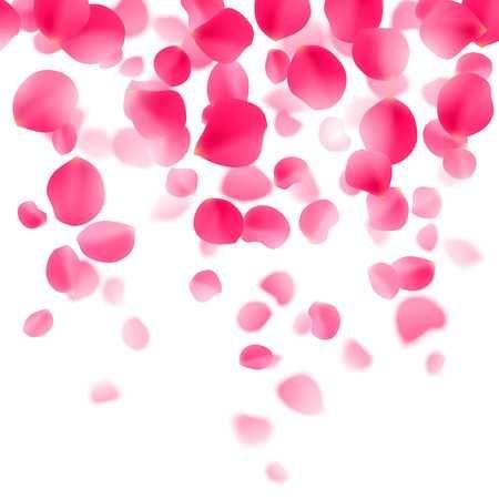 Petali Di Rosa Rossa Cadendo Su Sfondo Bianco Carta Parati Pinterest