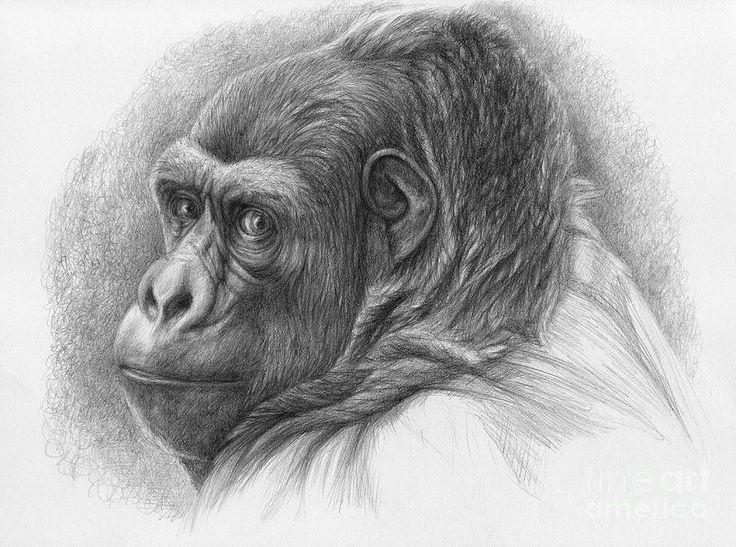 Dit plaatje heb ik gebruikt voor het arceren van het lichaam van de gorilla
