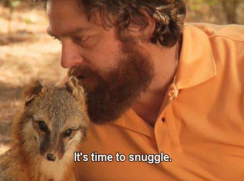 snuggable Zach Galifianakis