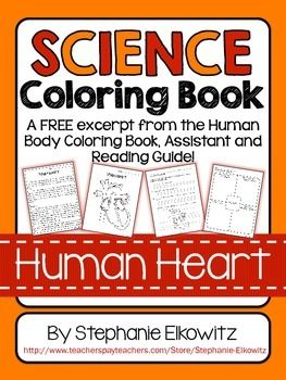 A FREE Excerpt From The Human Body Coloring And Literacy Unit Assistant
