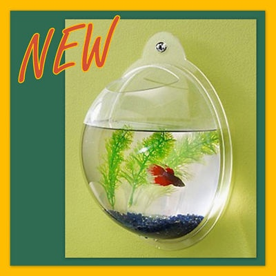 1000 Ideas About Gold Fish Bowls On Pinterest Fish
