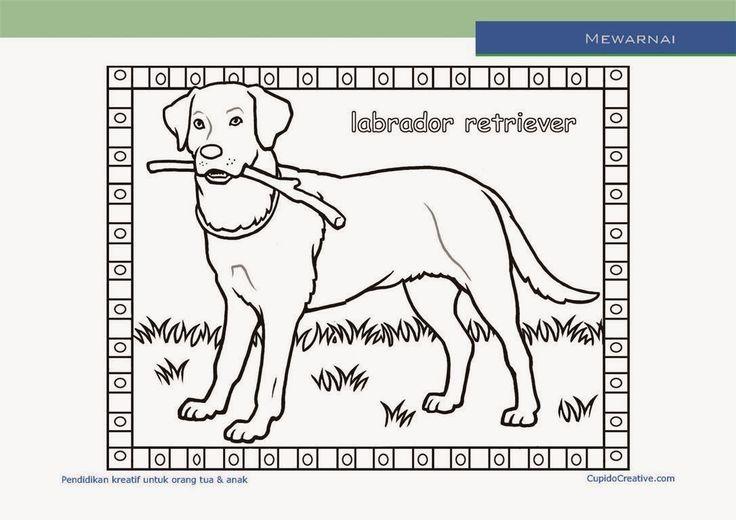 lembar kerajinan anak paud (balita/TK/SD), mewarnai anjing labrador