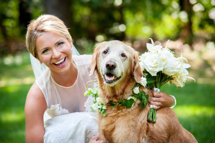 golden retriever wedding. Wedding pets. Bride and Dog. Heather Bohm-Tallman Photography. Mazzone catering.