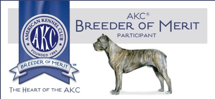 We Are Cane Corso Breeders Located In San Diego In The Sunny Southern California Area Here At