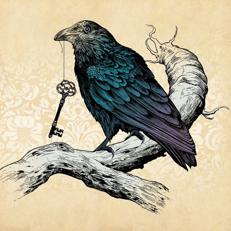 23 best images about raven on pinterest ink magpie for Ravens face tattoos