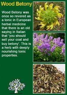 15 home remedies for preventing and treating pressure sores Wood Betony - can help with headaches