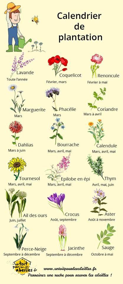 L'image contient peut-être : plante et texte