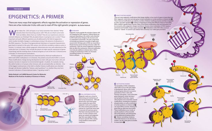 11 Best Epigenetic Diagrams Images On Pinterest