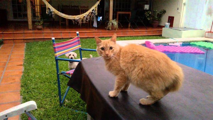 CAT VS DOG / GATO VS PERRO / CHAT VS CHIEN / GATTO VS CANE / 貓 与 狗 / ネコ ...
