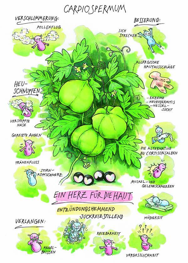 Cardiospermum halicacabum / Einzelmittel - Similasan