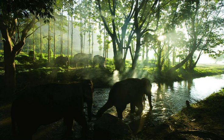 ELEPHANT HERD IN CHIANG MAI, THAILAND   Photograph via Biggieholla on Reddit   This beautiful photograph was apparently captured at the Patara Elephant Farm in Chiang Mai, Thailand. Patara is currently ranked as the #1 attraction in Chiang Mai on Trip Advisor with an average 5 star rating from 699 reviews.: Favorite Places, Travel Photo, Beautiful, Elephants Herding, Elephants Farms, Natural, Elephants Forests, Animal, Chiang Maithailand