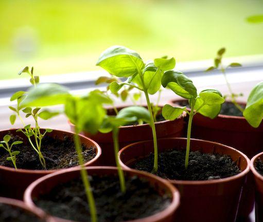 6 groentes wat jy van plantreste kan kweek