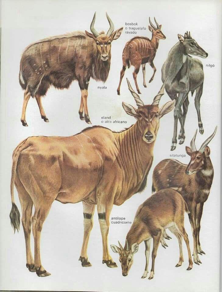 Oster láminas F animales domésticos-mascotas 1897
