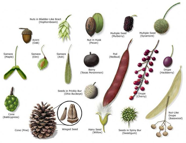 Best 25 tree identification ideas on pinterest plant for Different kinds of plants