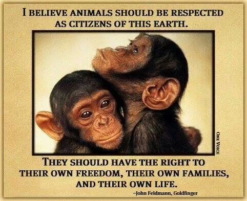 Image result for all animals should be respected as citizens of this earth