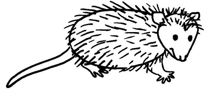 49 best Cartoon Possum Tattoo images on Pinterest ...