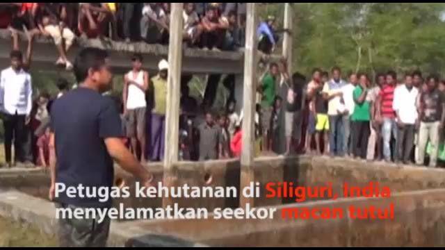 Petugas kehutanan di Siliguri, India menyelamatkan seekor macan tutul yang jatuh ke sumur. Keberadaan macan tutul semakin terancam akibat pemburuan liar.