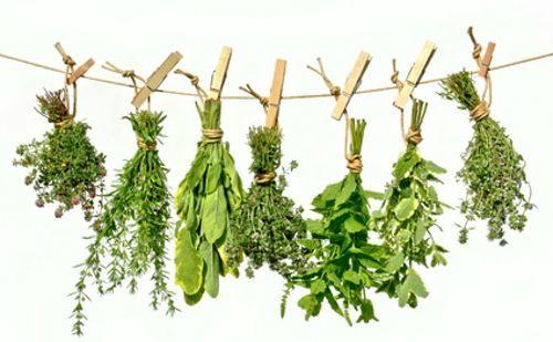 Para conservar las plantas medicinales con todas sus propiedades y que no se pudran, es imprescindible secarlas correctamente.