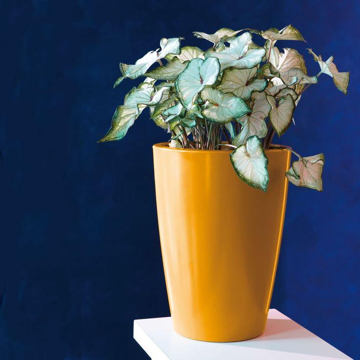 Vaso in resina plastica lucida Tylus Gloss