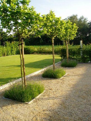 Tweede terras deze boompjes beplanting en steentjes tuin idee n pinterest - Tuin ideeen ...