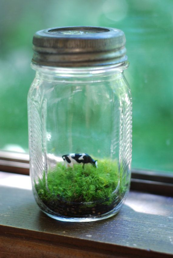 Cow In A Pasture Jar